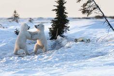 Polar Play - $425.00
