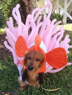Kim: This is Larry my dachshund wearing his clown fish in an anemone. His pink shirt is made from an old crib sheet. His felt fish is attached by the back...