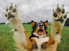 You can run, but I will find you... #GoPro #Dog #Puppy