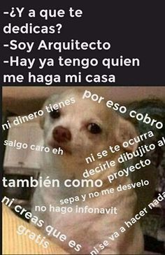 Perro Chihuahua Meme 's - Mega Memeces Spanish Jokes, Funny Jokes, Hilarious, Mexican Humor, Chihuahua Dogs, Dog Memes, Funny Wallpapers, Meme Faces, Best Memes