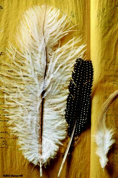 Have you ever found a random feather and wondered what it could mean…If you find a feather on the ground or floating from the air. It is a confirmation that angels are listening to you regarding a question or situation you are asking them for help with!