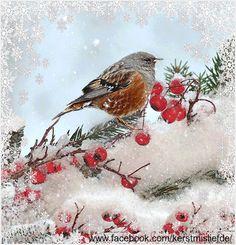 Christmas Bird, Christmas Animals, Merry Christmas And Happy New Year, Winter Christmas, Vintage Christmas, Winter Gif, Winter Scenes, Winter Snow, Illustration Noel
