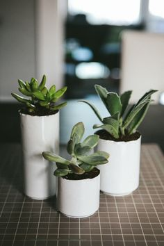 DIY succulent planters from spray painted aluminum soda cans