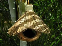 Tiki coconut bird house feeder in tropical palm tree setting.