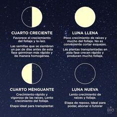 La fases de la luna, hay que tenerlas en cuenta para cuidar de nuestras plantas y también para cortarnos el pelo, depilarnos etc ¿Las tiene...