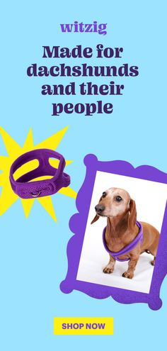 Dachshund Clothes, Dachshund Love, Weenie Dogs, Doggies, Dog Ramp, Wire Haired Dachshund, Miniature Dogs, Old Dogs, Puppy Love