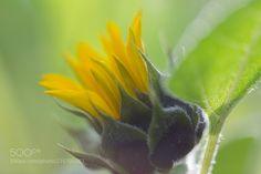 Come Closer (Ian McRae / Blainville / Canada) #Canon EOS 5D Mark IV #macro #photo #insect #nature