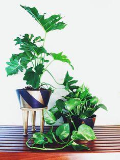 Chic plant DIY via the Jungalow