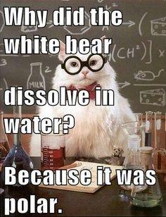 29 New ideas science humor memes chemistry cat Science Cat, Science Cartoons, Funny Science Jokes, Nerd Jokes, Math Jokes, Science Quotes, Science Memes, Nerd Humor, Funny Puns