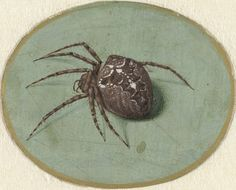 Spider, Jan Augustin van der Goes, 1690 - 1700 - Rijksmuseum Street Art, Botanical Illustration, Science Illustration, Botanical Art, Amazing Spider, Gravure, Art Plastique, Science And Nature, Natural History