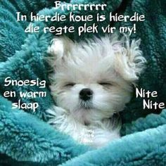 Good Night Wishes, Good Night Quotes, Goeie Nag, Afrikaans Quotes, Special Quotes, Sleep Tight, Morning Greeting, Are You Happy, Dog Cat