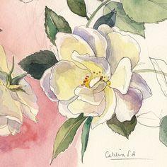 White Roses. Print of original botanic flowers Still by CATILUSTRE
