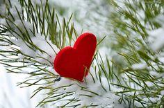 Gałązka, Świerku, Serce, Śnieg