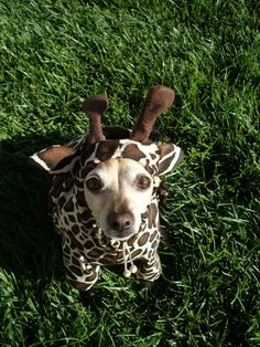 I think it's pretty much decided. Mojos getting a costume this year for Halloween.