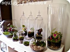 Terrariums and Miniature Gardens could be made with your rectangle vases.
