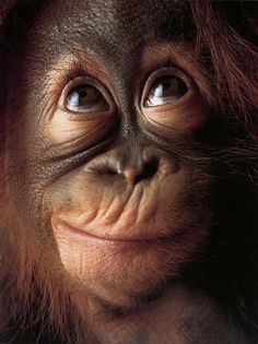 ~~Monkey Face by Tim Flach~~