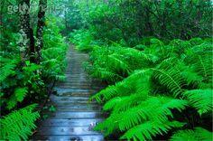 Cranberry Glades Botanical Area, Pocahontas Co, WV