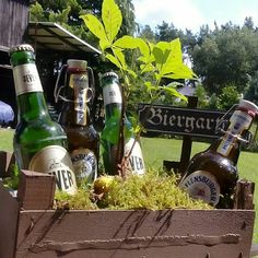 Schaerfchen's Creative World: Men's Gifts Beer Garden and Herb Garden - Modern Fathers Day Presents, Xmas Presents, Xmas Gifts, Diy Gifts, Rock Star Party, Diy Herb Garden, Experience Gifts, Beer Gifts, Business Gifts