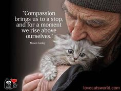 """Compassion does not hurt. Compassion not done is a bastard horror that should be outlawed. """"should"""" a word without teeth. Crazy Cat Lady, Crazy Cats, I Love Cats, Cute Cats, La Compassion, Compassion Quotes, Animals And Pets, Cute Animals, Gatos Cool"""