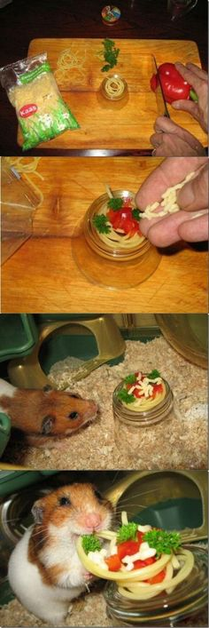 "Funny little guy is eating Italian tonight. #gerbil #spaghetti Thanks to Fluffy Dent for the following info: This is actually a recipe in a book called ""Happy Hamsters"". The book has a ton of different recipes including this one. One of my favorites is mini pancakes!"