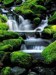 Moss and green Falls - Olympic Park National Park, Washington