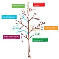 Custom Tree Pruning - Almstead Tree and Shrub Care Company Tree Diagram, Bathroom Photos, Bathroom Ideas, Tree Pruning, Caring Company, Tree Care, Bathroom Design Small, Trees And Shrubs, Wine Tasting