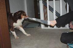 Hundetrick: Socken ausziehen