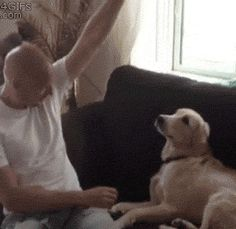 Dog-Like Reflexes