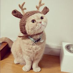 hahaha! DIY Crochet Reindeer Hat For Kitty lol im sure if you make it bigger you can do this for a dog lol