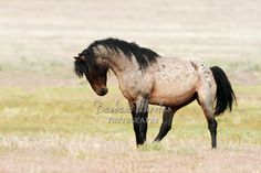 Utah has the most beautiful wild horses and many of them are shown on my website.  Come and visit.