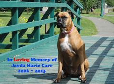 Reflections of Living and Losing a Dog #boxerdog #rainbowbridge #k9karma