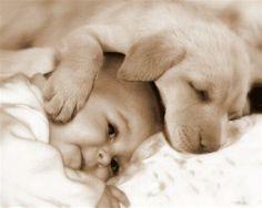 Câlin tendresse entre un Chiot Labrador Sable et un bébé !                                                                                                                                                                                 Plus