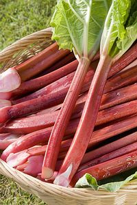 Rebarbara termesztése - gazigazito.hu Medicinal Plants, Good To Know, Celery, Asparagus, Carrots, Garden Design, Raspberry, Vegetables, Flowers