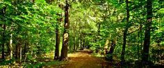 forest_trees_road_nature_80841_2560x1080.jpg (2560×1080)