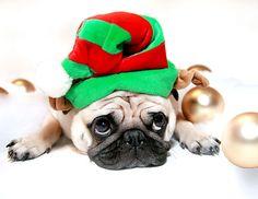 CHRISTMAS PUG Invitations by Admin_CP8433649