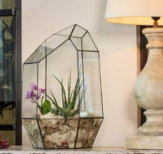 Are you interested in our Terrarium? With our succulents you need look no further.