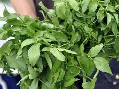 Closely related to mustard greens, cabbage and arugula, watercress pairs particularly well with fresh citrus, such as orange and grapefruit, as… Watercress Recipes, Beef Salad, Mustard Greens, Arugula, Grapefruit, Spice Things Up, Entrees, Cabbage, Sandwiches
