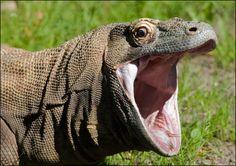http://esromart.hubpages.com/hub/East-Nusa-Tenggara-from-Diving-Heaven-to-the-Giant-Komodo-Dragon