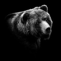 Los monocromos y tristes retratos animales de Lukas Holas