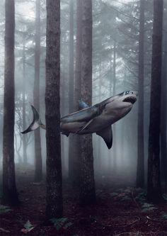 this is not where sharks belong.