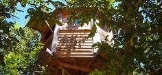 Walnut Treehouse