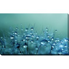 """Found it at Wayfair - """"Shower"""" by Sharon Johnstone Photographic Print on Wrapped Canvas"""