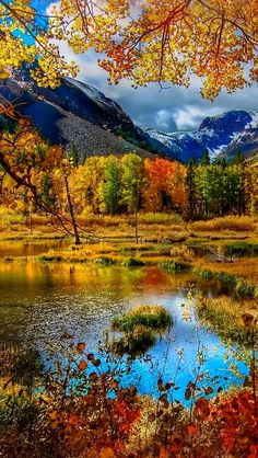 Beautiful fall colors in the mountains Beautiful World, Beautiful Places, Beautiful Pictures, Trees Beautiful, Fall Pictures, Nature Pictures, Funny Pictures, Landscape Photography, Nature Photography