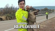 El sujeto es empleado de una empresa estatal, no tuvo reparos en tomarse una foto sumamente cruel que luego se hizo viral en las redes sociales. Kangaroo, Firefighters, Animales, Fotografia, Pictures, Baby Bjorn