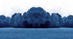 Woodland photography Blue Trees  Tree Photography by MOONGARDENART, $50.00