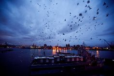 Review: In Fly by Night Pigeons Light Up the Brooklyn Navy Yard