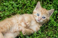Pet parenthood is a big responsibility! Make sure you're ready by using this handy checklist.