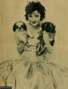 Starlet with pekingese pups