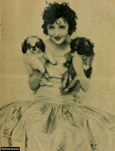 Starlet with pekingese pups