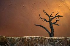 """This photo from Peter Poppe's shows the contrast in texture in this other shot from Deadvlei, Sossusvlei, Namibia, is fascinating. A 4th image from the third-place winner of the  """"Landscape Photographer of the Year"""" contest."""